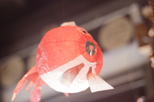 空とぶ金魚の写真素材 [FYI00439418]