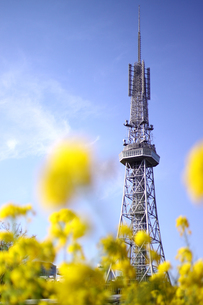 名古屋テレビ塔と菜の花の写真素材 [FYI00439482]
