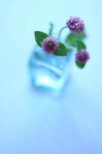 センニチコウとガラス瓶の写真素材 [FYI00439497]
