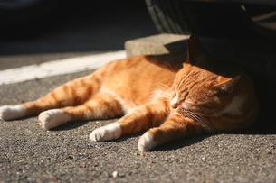 車の下でお昼寝中のネコの写真素材 [FYI00439518]