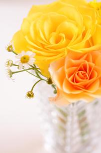 春色のバラを生けるの写真素材 [FYI00439524]