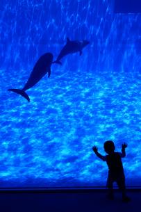 イルカと少年のシルエットの写真素材 [FYI00439555]