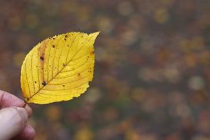小さな秋見つけたの素材 [FYI00439567]