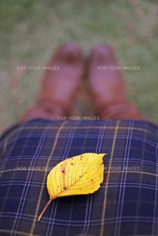 秋色一枚。の写真素材 [FYI00439588]