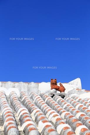 赤瓦屋根とシーサーと青空の写真素材 [FYI00439631]