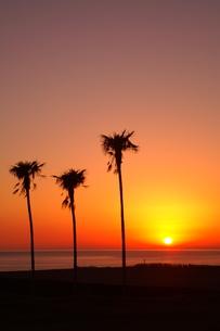 夕景三本の木のシルエット室戸ジオパークの写真素材 [FYI00439754]