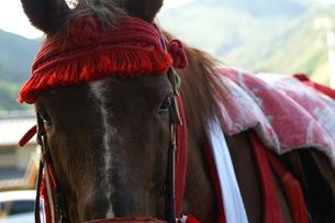 馬正面顔アップの写真素材 [FYI00439785]