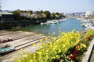 室津漁港 春 の写真素材 [FYI00439866]