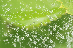 水滴と葉の写真素材 [FYI00440075]