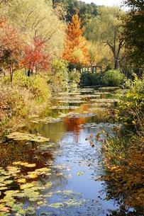 秋の池の写真素材 [FYI00440099]
