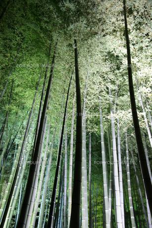 竹林 ライトアップの素材 [FYI00440102]