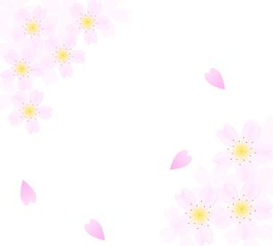 桜の花びらのフレームの写真素材 [FYI00440311]