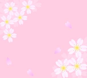 ピンクをバックにした桜の花のフレームの写真素材 [FYI00440313]