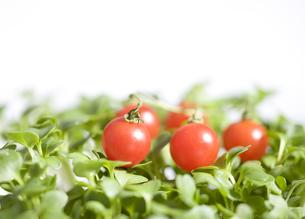Tomato&greenの写真素材 [FYI00440380]