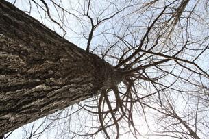 樹木の写真素材 [FYI00440426]