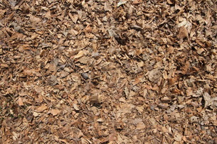 枯れ葉素材の写真素材 [FYI00440445]