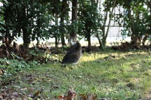 振り向いた野良猫の写真素材 [FYI00440458]
