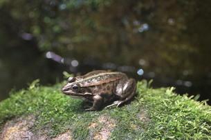 カエルの写真素材 [FYI00440494]