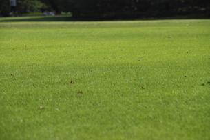 一面の芝生の写真素材 [FYI00440584]