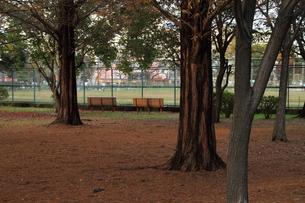 夕方の公園の写真素材 [FYI00440590]