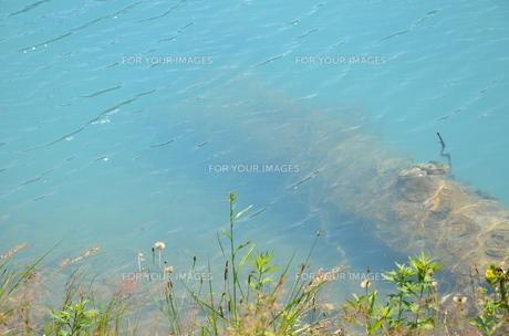 青い池(美瑛町)の写真素材 [FYI00440644]