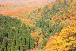 大山の裾野の紅葉の写真素材 [FYI00440677]