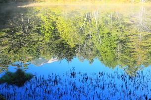 牛止め池の写真素材 [FYI00440691]