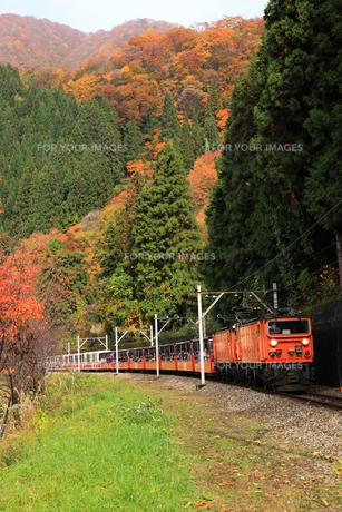 トロッコ列車の写真素材 [FYI00440727]