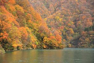 宇奈月湖の紅葉の写真素材 [FYI00440751]