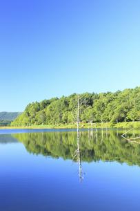 女神湖の写真素材 [FYI00440795]