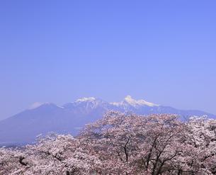 八ヶ岳連峰の写真素材 [FYI00440813]