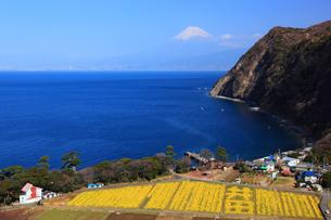 駿河湾と富士山の写真素材 [FYI00440909]