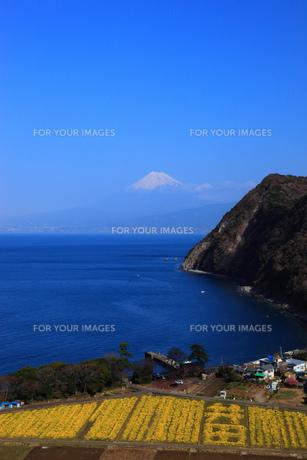 駿河湾と富士山の素材 [FYI00440915]