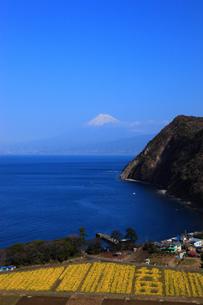 駿河湾と富士山の写真素材 [FYI00440915]