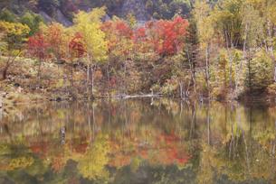 まいめ池の紅葉の素材 [FYI00440959]