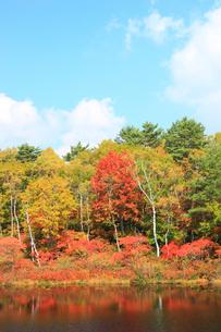 志賀高原の紅葉の素材 [FYI00440988]
