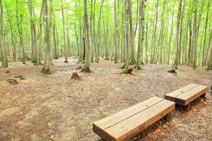 美人林とベンチの素材 [FYI00441002]