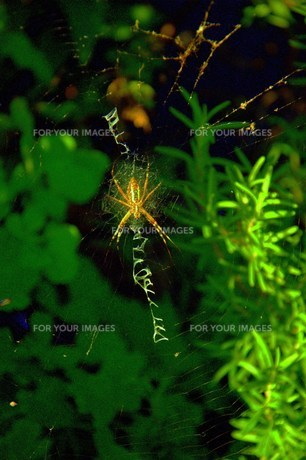 Spider's Messageの写真素材 [FYI00441034]