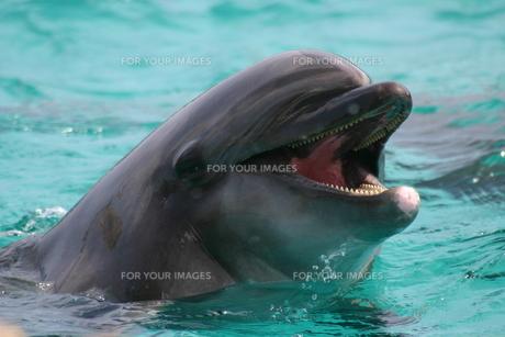 笑顔のイルカの写真素材 [FYI00441099]