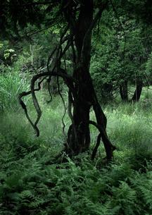 魔の森での写真素材 [FYI00441101]