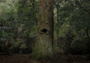 森の番人の写真素材 [FYI00441105]