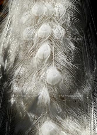 聖者のドレスの写真素材 [FYI00441124]