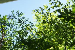 緑の葉の写真素材 [FYI00441251]