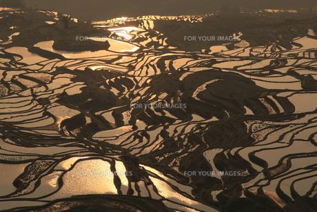 夕陽に反射する棚田の写真素材 [FYI00441963]
