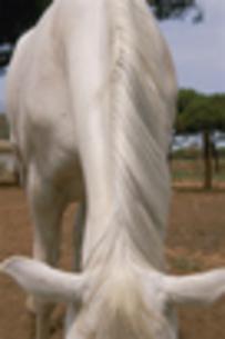 馬の素材 [FYI00441987]