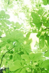 新緑の素材 [FYI00442000]