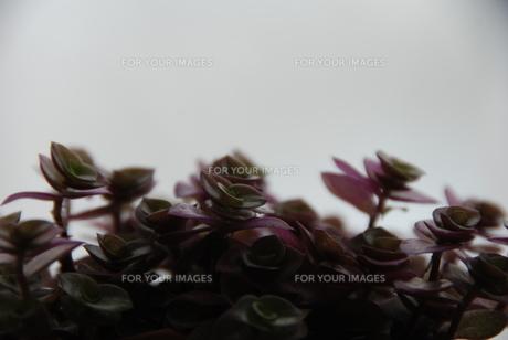 窓辺の葉の素材 [FYI00442037]