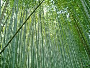 竹林の写真素材 [FYI00442055]