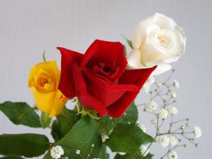 三本の薔薇の写真素材 [FYI00442089]