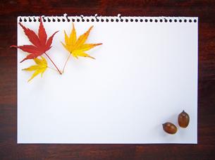 秋のたよりの写真素材 [FYI00442120]